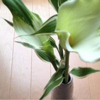 お花を飾る~