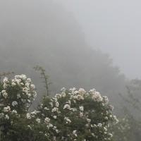 山岳点景:Favorite Scene@今夏の山
