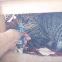 去年産まれたキジトラの猫たちの3通りの行く末〜