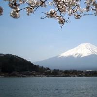 囲碁と河口湖桜富士2