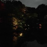 椿山荘のホタル (ば)