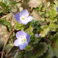 春一番の草花たち