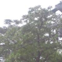 2468号Дождь(雨)