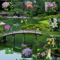 初夏に咲く花 小庭にあれこれと