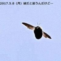 蜂ですよ~
