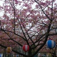 春分の日になりました。
