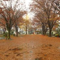 鹿沼公園の紅葉とカワセミ