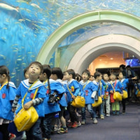 ♪水族館見学♪