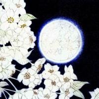 制作途中2 (夜桜)
