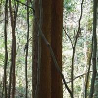 森の中にもイノシシ食害あり
