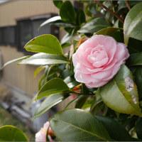 3月20日(月)暑さ寒さも彼岸まで・・・