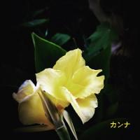 メタモン9匹目ゲット