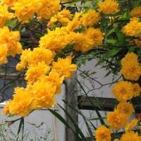 春の花はまだまだ花盛りです。