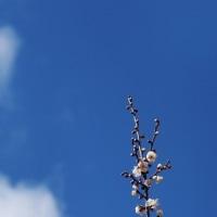農業公園の梅と・・・