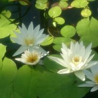 野毛山瞑想部 6月