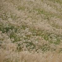 F700GSで塩塚高原のススキを見て来たよ!