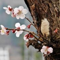 『梅』と『桜』!!!