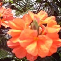 情熱的な橙色から