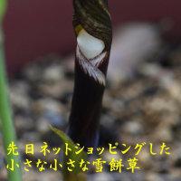 2017/04/30 今朝の庭
