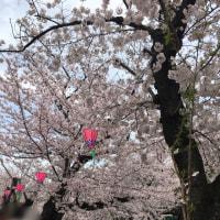 桜祭り2017