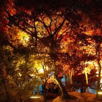 安行の「紅葉」が、川口駅前にやってきます!