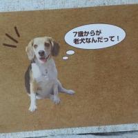 シーちゃんシニアかぁ〜