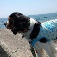 海辺の散歩は「まる」も大好き!