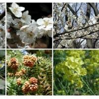 2009-03-23千葉公園