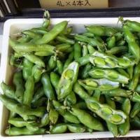 闘病日記5/27(土)・・・空豆