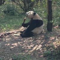 4月24日♪お弁当とパンダ
