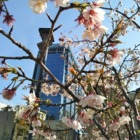 2017年3月18日(土)の日本経済新聞(朝刊)「リーダーの本棚」に日本政策投資銀行相談役の橋本徹氏が登場されていました。