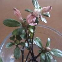0321 ちいさい花が咲いたのです