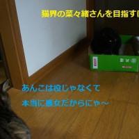 猫にマタタビ(=^・^=)