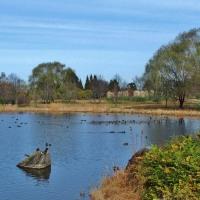 北アメリカのヌマスギ(ラクウショウ)は呼吸根で呼吸する・・(4)・・・富山市婦中・富山県中央植物園