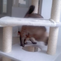 モンゴルの猫