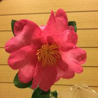 山茶花が咲き