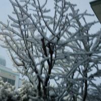 天気予報通り、真っ白だあ!