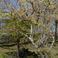 伊達方面へのドライブ3)善光寺自然公園