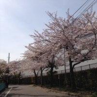 足立区立江北小学校「入学式」に行ってきました。