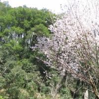 どんぐり村のお花見と天狗山ハイキング