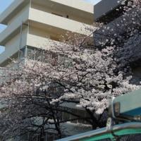 ③去年のリベンジ!目黒川の桜クルージング続き