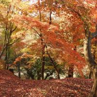 北野天満宮は紅葉が見ごろ