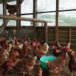 鶏舎の「蒸し風呂状態」解消