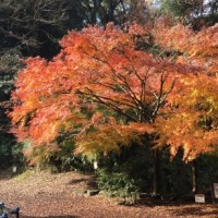 クライマックスを迎えている衣笠山の紅葉