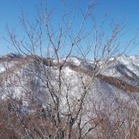 20170326_蟠渓山604m