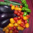 夏野菜の頂き物