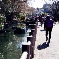 拝島の水めぐりと昭和の森を歩く!