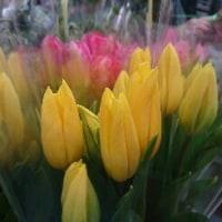 お仏壇に春を呼ぶ