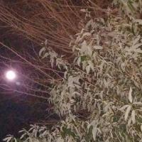 寒い((⛄))夜に・・・