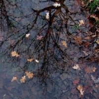 秋枯れの公園で